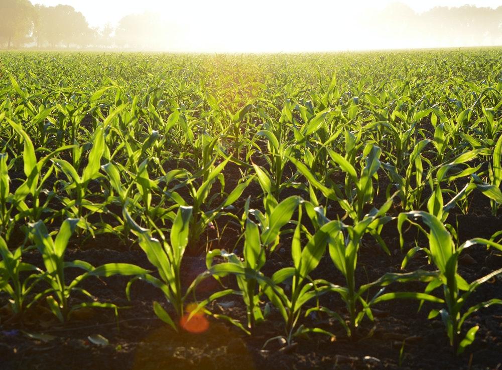 Cursos Sector Agricultura y Ganadería